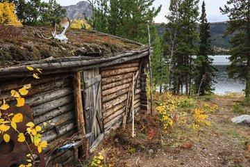Wooden hut trapper - Rose Lake Yukon Canada