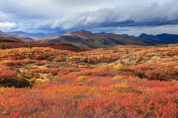 Tundra in autumn after a storm - Yukon Canada
