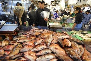 Stale Fish Market Tsukiji Tokyo Japan
