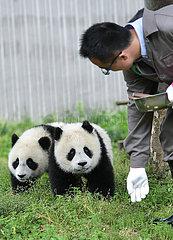 CHINA-SICHUAN-wolong-PANDA-Kindergarten (CN) CHINA-SICHUAN-wolong-PANDA-Kindergarten (CN)