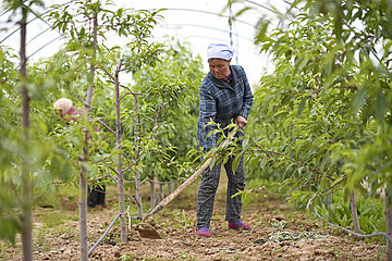 CHINA-NINGXIA-Armutsbekaempfung (CN) CHINA-NINGXIA-Armutsbekaempfung (CN)