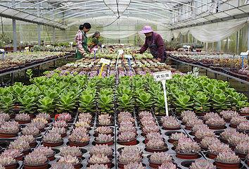 # CHINA-ZHEJIANG-lishui-SUCCULENT PLANTS (CN)