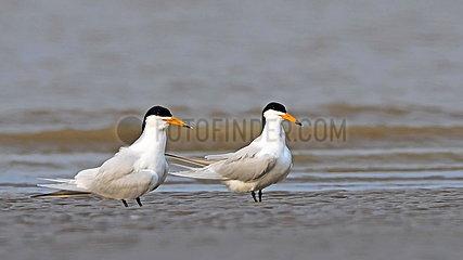 CHINA-FUJIAN-FUZHOU-MINJIANGKOU WETLAND-BIRDS (CN)