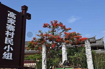 CHINA-YUNNAN-FLAMBOYANT TREE(CN)