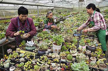 # CHINA-ZHEJIANG-lishui-SUCCULENT PLANTS (CN) # CHINA-ZHEJIANG-lishui-SUCCULENT PLANTS (CN)