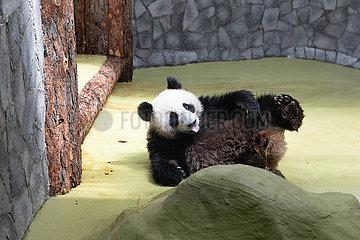 RUSSIA-MOSCOW-CHINA-PANDAS