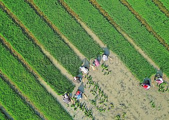 CHINA-AGRICULTURE-SALINE ALKALI SOIL (CN)