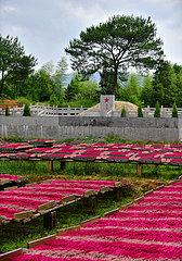CHINA-FUJIAN-CHANGTING-RED ARMY-HISTORY (CN)