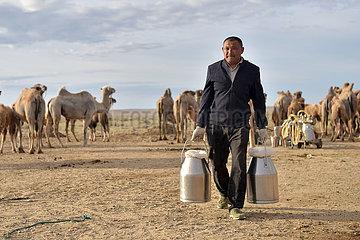 CHINA-XINJIANG-ALTAY-CAMEL BREEDING (CN)