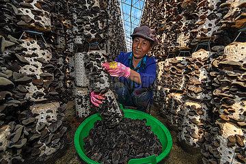 CHINA-JILIN-EDIBLE BLACK FUNGUS INDUSTRY (CN)