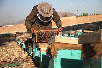 AFGHANISTAN-NANGARHAR-BEE FARM