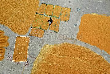 #CHINA-SHANXI-YUNCHENG-FARM WORK (CN)