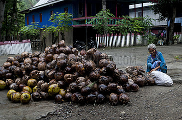 INDONESIA-WEST SULAWESI-DAILY LIFE-COPRA