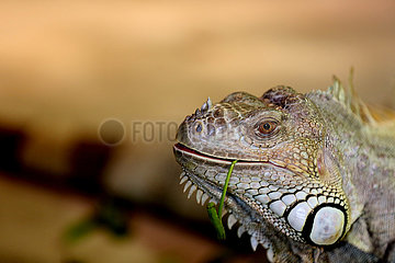 MYANMAR-YANGON-EXOTIC PET LOVER