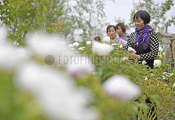 CHINA-NINGXIA-Armutsbekaempfung (CN)