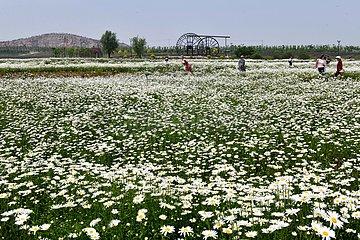 CHINA-SHANDONG-Anqiu KULTURELLE CREATIVITY Industrial Park (CN) CHINA-SHANDONG-Anqiu KULTURELLE CREATIVITY Industrial Park (CN)