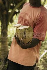 Frisch aufgeschnittene Kokosnuss p600m2073025