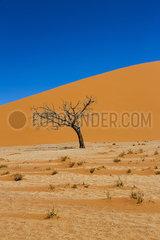 Toter Baum  Sossusvlei p975m2076945