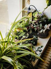 Zimmerpflanzen p1177m2076544