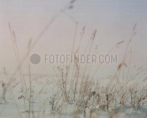 Nebel p1063m2071775
