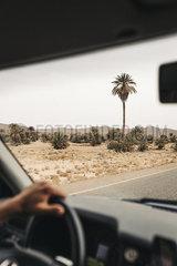 Hand am Lenkrad im Auto mit Blick auf Palmen in der Wueste von Marokko p1497m2071434