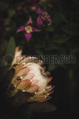 Protea und lila Blueten p1150m2076408