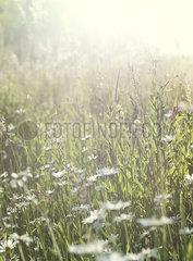 Blumenwiese p922m2071509
