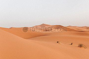 Duenen der Sahara in Marokko in warmem Licht bei Sonnenaufgang p1497m2071441