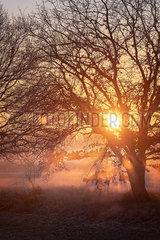 Sonnenaufgang im Fruehnebel p739m2071164