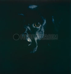 Labrador Mischling p979m2076993