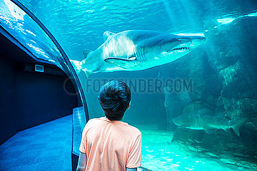 Junge in einem Ozeanium