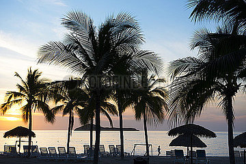 Palmen in Panama