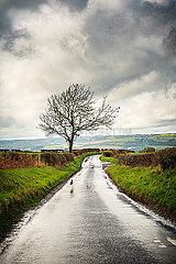 A bare leafless tree next to a wet rural road in the North of England