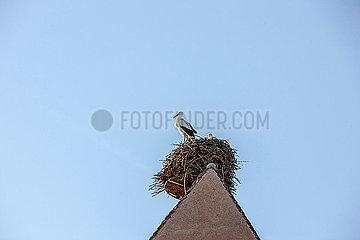 Storch auf Kirchturm im Nest