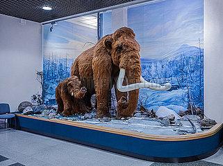 Mammut im Museum
