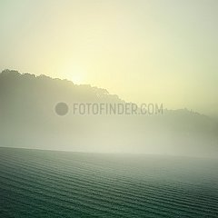 Feld am Morgen