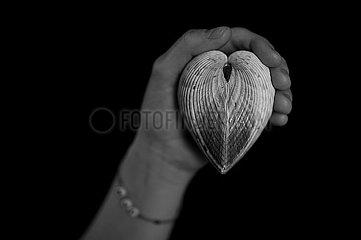 Frau haelt Herz in der Hand