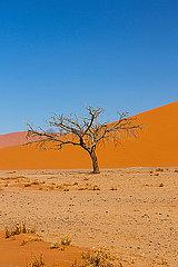 Toter Baum  Sossusvlei