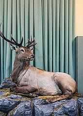 Ausgestopfter Hirsch im Museum