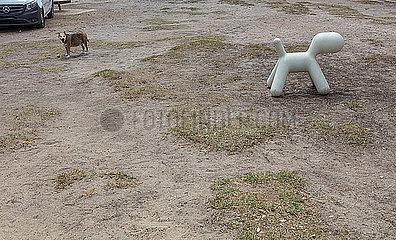 Plastikhund