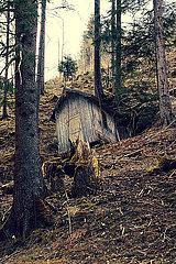 Verlassene alte Huette im Wald