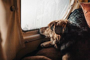 Hund schaut traurig aus Autofenster bei Regen