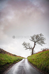 A bare leafless tree next to a rural road in the North of England