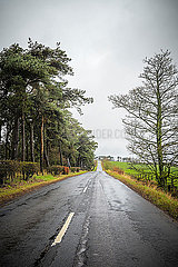 A straight country road with trees on both sides and overcast sky