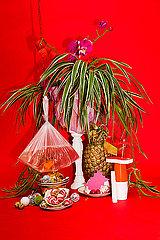 Zimmerpflanze und andere Objekte
