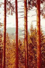 Blick durch Baeume auf Gebirge
