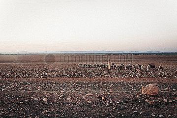 Berber mit Schafherde in der Wueste von Marokko p1497m2071409