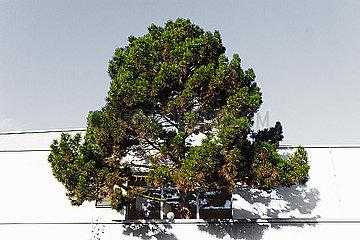 Stadtbaum p417m2076094