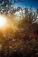 Herbstregen p075m2071213