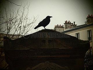 Rabe auf Friedhof p132m2071280
